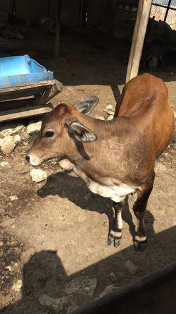 Animal Animal Themes Sunlight Vertebrate Mammal Domestic Animals Shadow