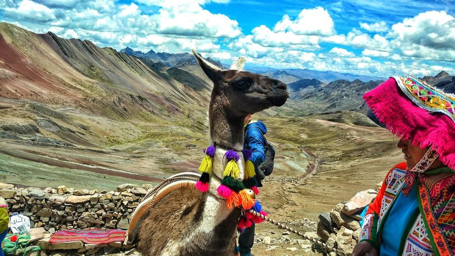 Animal Themes Domestic Animals Day One Animal Mammal Outdoors No People Mountain Multi Colored Sky Nature Close-up Llama❤ Perù 🇵🇪