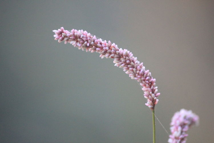 Close-Up Of Fresh Pink Flowers Against Sky