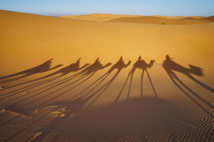 Sahara Desert, Morocco Sand Dune Desert Shadow Sand Land Landscape Camel Scenics - Nature Sky Nature Animal Themes Animal Domestic Animals Mammal Group Of People Beauty In Nature Focus On Shadow Tranquil Scene Arid Climate Riding Outdoors Climate Sahara Desert Morocco Summer
