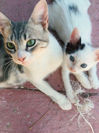 Cat Kitten Kittenoftheday Cat♡ Cat Lovers Catoftheday Cats Of EyeEm Cateyes Momcat From My Point Of View
