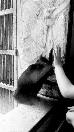 Pets People Human Hand Indoors  One Animal One Person Hello World Taking Photos Nature Zoo Friendship Twooderworlds Blackandwhite Blackandwhite Photography