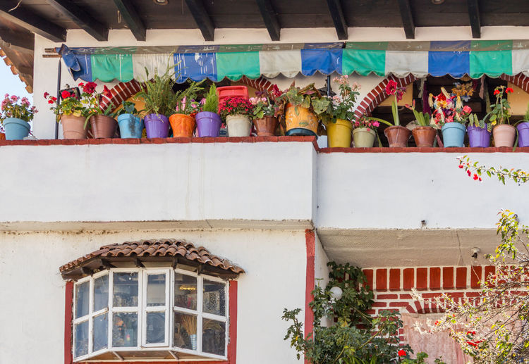 A row of colorful flower pots on the balcony of a house in janitzio, Michoacan, Mexico Arrangement Balcony Choice Collection Colorful Colorfull Day Display Flower Pot Full Frame In A Row Large Group Of Objects Multi Colored No People Outdoors Pots Repetition Side By Side Variation Window