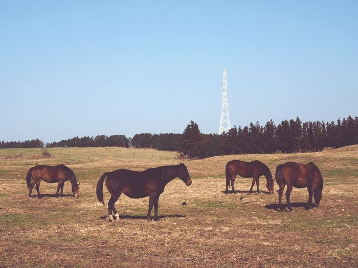 Horses On Landscape Against Clear Sky