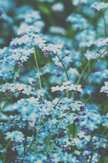Flower Blue My Fav♡ love this ones