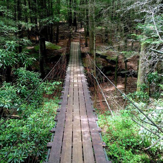 The long road traveled Bridge Hiking Green Nature
