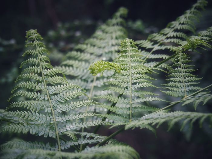EyeEmNewHere Plant Growth Green Color Leaf Beauty In Nature Plant Part The Still Life Photographer - 2018 EyeEm Awards Close-up Nature Tree Day Selective Focus Freshness Branch