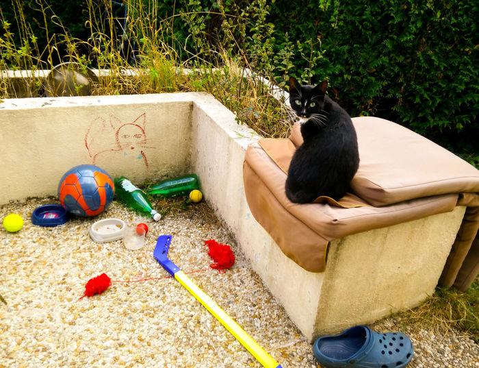 Cat Cats Multi Colored Sand Pail And Shovel Palette Bucket Painter - Artist Artist's Canvas Oil Painting Fine Art Painting