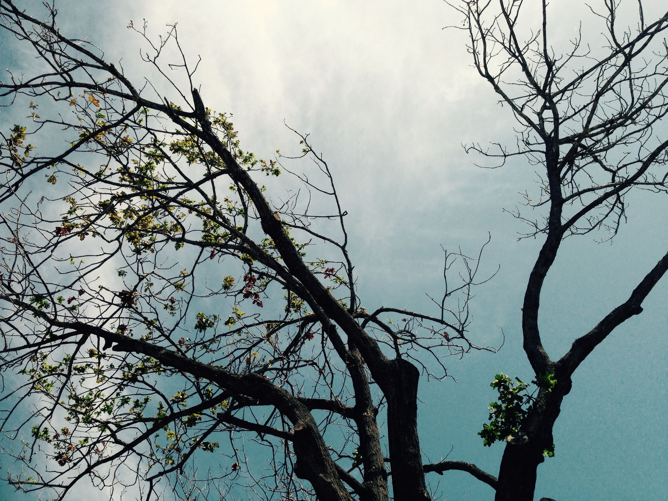 branch, bare tree, low angle view, tree, sky, tranquility, nature, cloud - sky, silhouette, beauty in nature, scenics, outdoors, growth, cloud, tree trunk, no people, cloudy, day, tranquil scene, high section