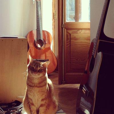 Today is a day of music! #music #cat #catsofinstagram #guitar #guitarra #sun #sol #window #ventana #musica #igscout #_wg #instapic #instagramer #insta_crew #instamillion #tagstagramers #instago #tagsforlikes #photooftheday #instagroove #igersmadrid #picof Guitarra Instago Cat Insta_crew Sun Igscout Tagsforlikes Music Instagramer Catsofinstagram Guitar _wg Window Instagroove Sol Instapic Photooftheday Instamillion Musica Tagstagramers Iphonesia Picoftheday Ventana Igersmadrid