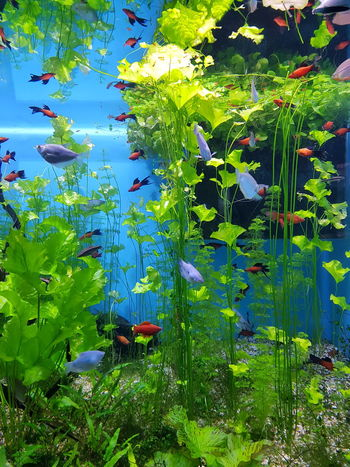 Nature Water Underwater Animal Themes Sea Life Freshness Large Group Of Animals Aquarium Life Fishs Animal Wildlife Sea Relaxing рыбы MosqariumFish Aquarium аквариум москвариум Moscwarium Beauty In Nature Nature River World