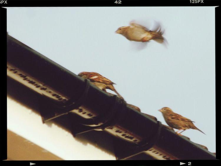 Nikon D80 And 55-200mm Tamron Lens. EyeEm Nature Lover 3little Birds Bird Taking Flight