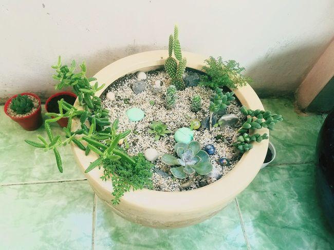 Plant No People Nature Succulents
