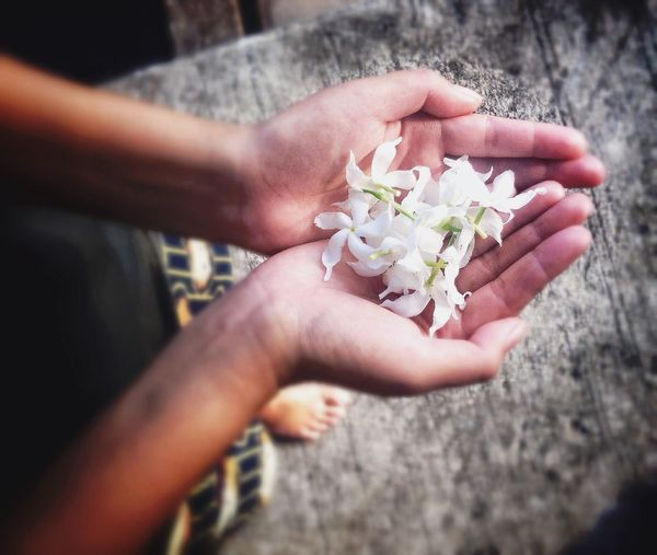 Plucked flower in hand