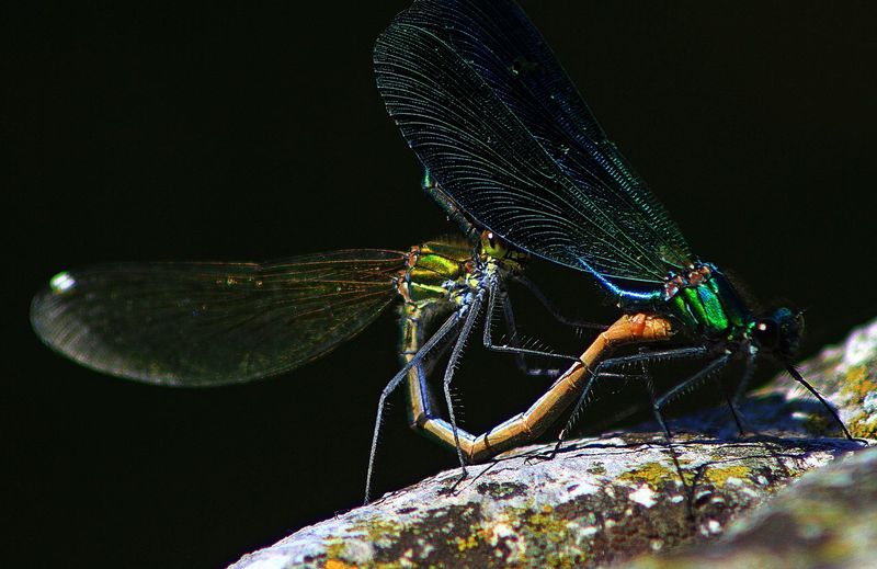 Detail shot of insect against black background