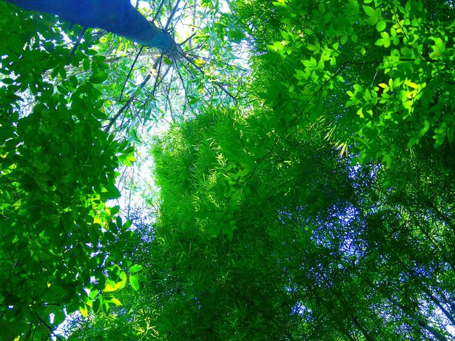 Low Angle View Nature Green Color