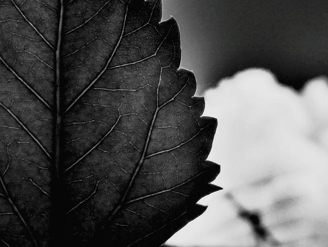 📷❤🌿 Perfeita #lightroom #motog3 #luzdesol #photography #Nature  #firstpicture #minimalism #minimal #monochrome #adventure Photography #macro #blackandwhite #landscape #nature #photography #EyeEmNewHere #clouds #sunset #nature #sunlight #beautiful #clouds  EyeEmNewHere