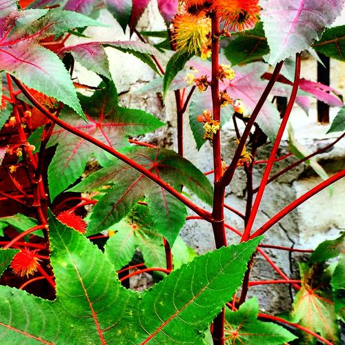 Leaves changing Autumn Botany Branch Change Close-up Focus On Foreground Fragility Green Green Color Growing Growth Leaf Leaf Vein Leaves Plant Springtime Stem