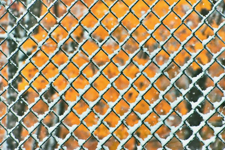 Chain-link fence covered in snow in fall colors