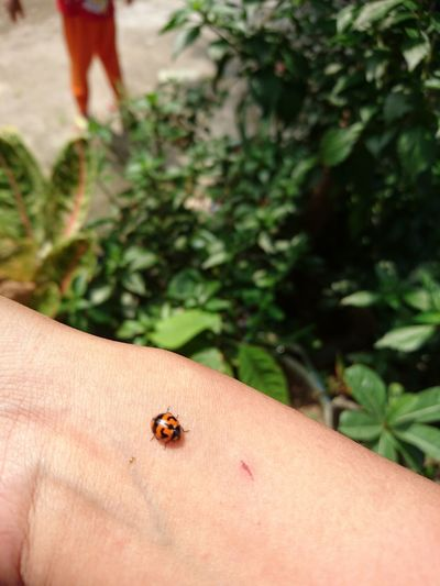 lady bug Human