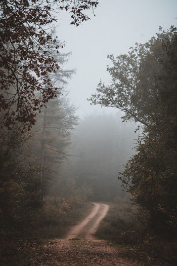 Forest Track Tree Fog Plant Forest Nature Land Road Tranquility Beauty In Nature Day No People Growth Tranquil Scene Non-urban Scene Landscape Outdoors The Way Forward Environment Transportation Hazy