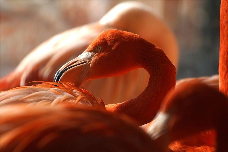 Close-up of flamingoes at tierpark berlin