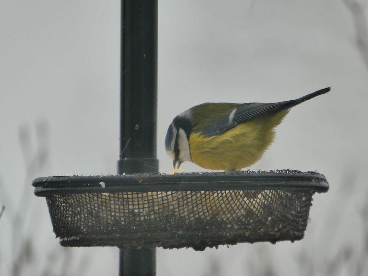 Bird Animal Themes Animals In The Wild One Animal Animal Wildlife Perching Focus On Foreground