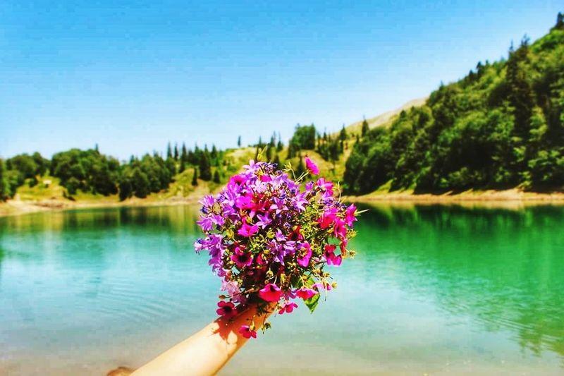 მწვანე ტბა Mtsvane Tba Flower Beauty In Nature Lake Sky Flower Head