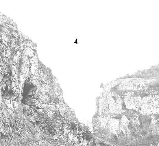 Blackandwhite Birds In Flight Bw_collection Divelandscape