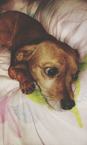 Nick Mydog♡ Relaxing Time Capture The Moment I Love My Dog