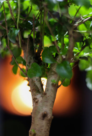 1300d 50mm 50mm F1.8 Leafs Nature Tree Wood Beauty In Nature Bonsai Bonsai Tree Canon Canon 1300d Close Up Close-up Focus On Foreground Green Color Growth Leaf Leaf Vein Macro Nature_collection No People Outdoors Plant Wood - Material