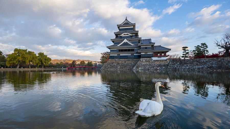 View of swan in lake against cloudy sky