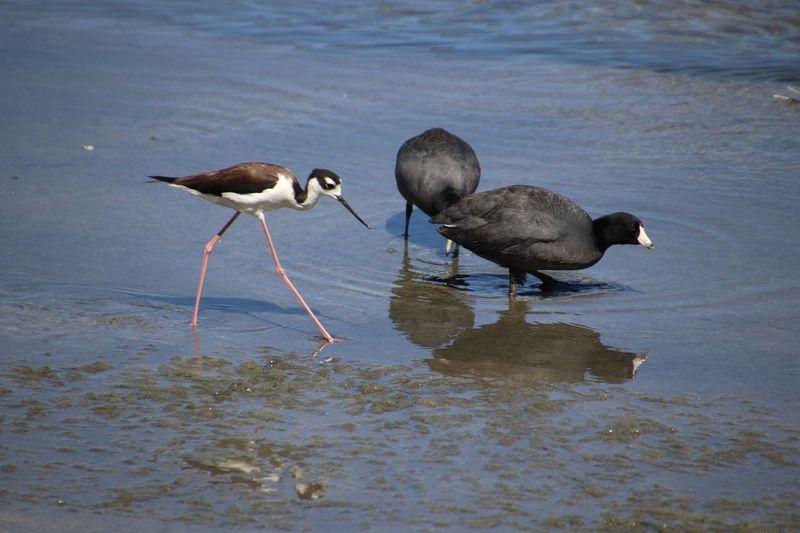 EyeEm Selects Bird Water Animal Themes Animal Wildlife Animals In The Wild Animal Group Of Animals