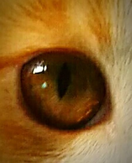 Ojo felino
