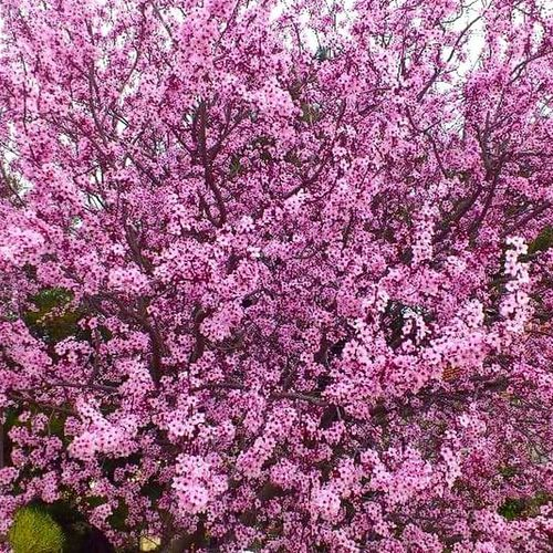 Flower Growth Nature No People Freshness Full Frame Fragility Tree Pink Color Beauty In Nature Backgrounds Close-up Outdoors Day