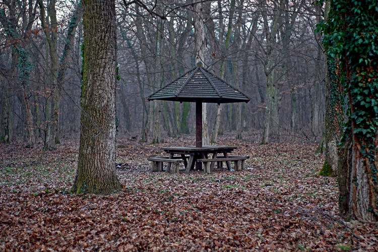 Construction Park Bench Picnic Wood Autumn Beauty In Nature Day Forest Leaf Leaves Leisure Activity Moody Weather Nature No People Outdoors Park Plant Tranquility Tree Wood - Material