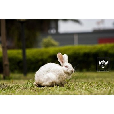 Animal Love Jiniuskonxeptsphotography Photography