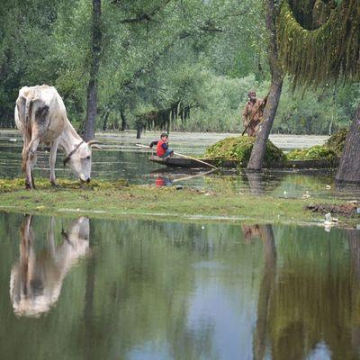 Life Around The Lake! AshtangooGhat AloosaGhat PortOfAisa Bandipur Kashmir Pakistan Kasheer Koshur Itravel Italk Isee Iclick IIshoot Iphotograph Iamme IAmRevo IAmKashmir IExploreMe IExploreKashmir IExplore Explore ExploringUnknown Lake Lives Wular Reflection Revo Revoshots IAmRevo RevoshotsPhotography