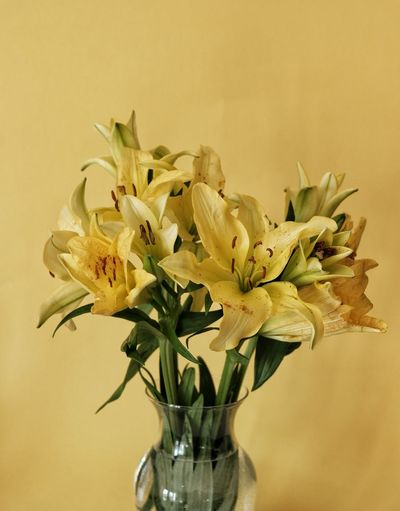 Vase of pastel yellow lillies with pastel yellow background Flowering Plant Flower Freshness Fragility Plant Vulnerability  Vase Beauty In Nature Close-up Flower Head Indoors  Yellow Petal Inflorescence No People Flower Arrangement Nature Colored Background Wall - Building Feature Glass - Material Bouquet Bunch Of Flowers Lillies Pastel Colors Vase