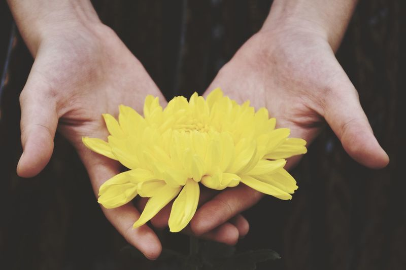 Close-up of hands holding vibrant yellow flower outdoors