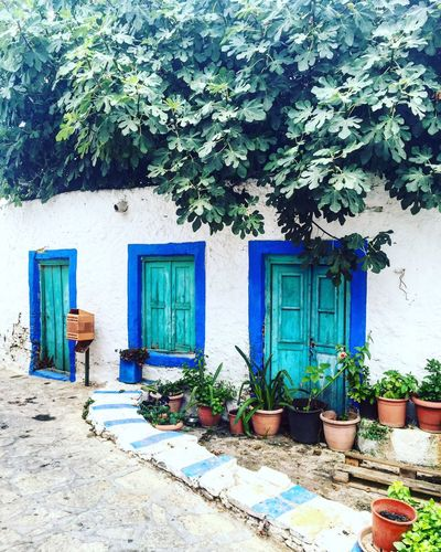Greek Islands Greece Dodecanese Arcitecture Building House Nature Lipsi Eyeemoninstagram EyeEm Eyem Best Shots Nature_collection EyeEm Nature Lover EyeEm Best Shots The Street Photographer - 2016 EyeEm Awards EyeEm Best Shots - Nature