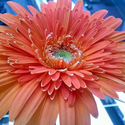 Lumia magic No Filter No_edits Ekm Clickie LumiaLove Lumiclick Lumia Lumiographer Flower Orange Nature