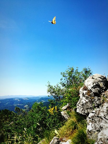 Nature Sky Landscape Flying Clear Sky Day Blue Outdoors No People Beauty In Nature Animal Themes Buterfly🌸 Butterfly Butterfly Collection Butterfly ❤ Butterflies And Moths Buterfly 🌺🌺🌺