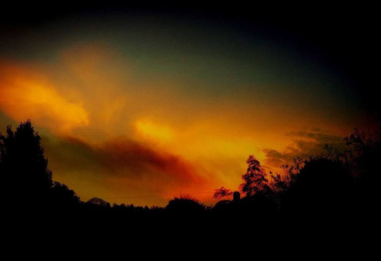 Sunset Tree Tranquil Scene Nature Dramatic Sky Sky Cloud - Sky Forest Landscape Shadow Beauty In Nature Backlight