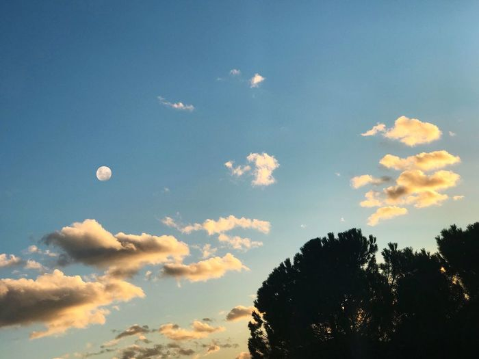 End of the day Sky Nature Beauty In Nature Low Angle View Cloud - Sky Tree Scenics Moon Outdoors Blue Day