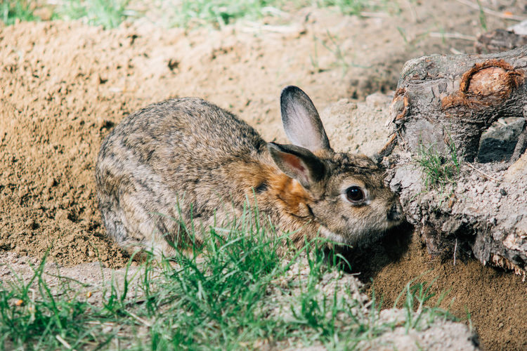 Bunny  Close-up Digging Hole Mammal Nature One Animal Outdoors Rabbit