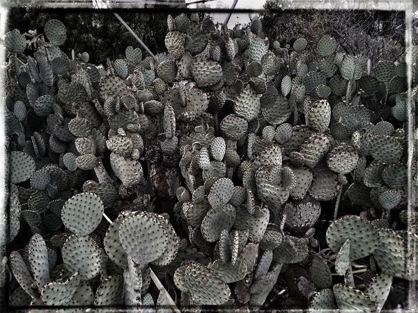 Abundance Auto Post Production Filter Backgrounds Beauty In Nature Cactus Close-up Day Flower Head Freshness Full Frame Growth Large Group Of Objects Marine Natural Pattern Nature No People Outdoors Pattern Plant Succulent Plant Textured  Transfer Print