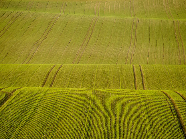 Ground waves Agriculture Green Color Plant Crop  Rural Scene Growth Field No People Landscape Full Frame Backgrounds Land Farm Nature Pattern Day Tranquility Striped Environment Tranquil Scene Ground Wave