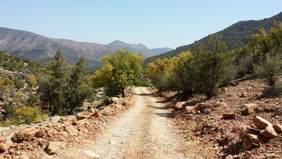 Road Country Travel Trip Trek Trekking Nature Landscape Forest Arganeraie Argane No Filter No Filters Or Effects Morocco