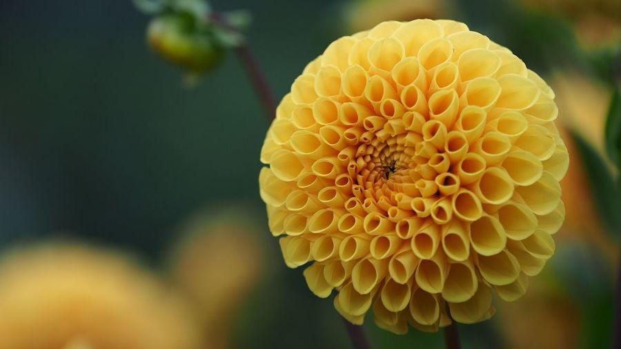 Beautiful symmetric flower Symmetry Flower Head Flower Biology Yellow Petal Close-up Plant